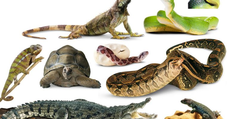 NATURE ASSOCIATION REPTILE DEMONSTRATION … ARE YOU BRAVE ENOUGH TO MEET THEM?